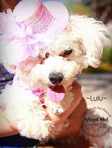 lulu-after-2
