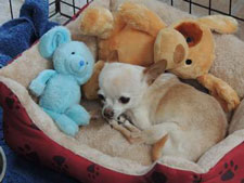 duchess-bed-toys