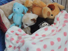 duchess-snuggle-in-bed