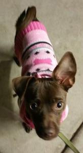 Abby1sweater