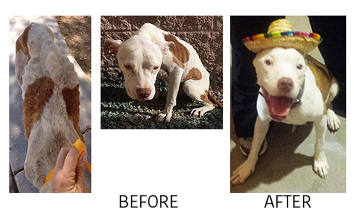 angel-before-after-700