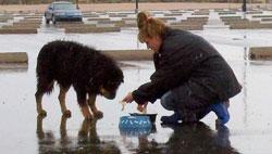 caesar-rescue-feeding-3