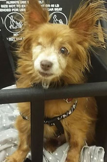 Jackie-adopted