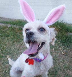 Bunnyafter-Bunny-Ears250