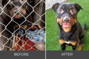mistreated dog brooklyn finds new home
