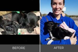 small black dog with puppies gets rescued