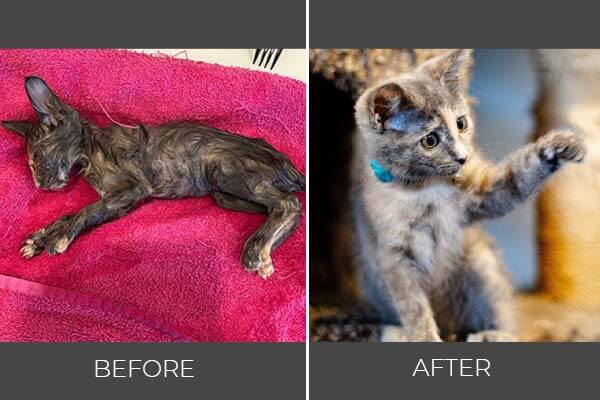 Rescued cat Beyonce before and after photo