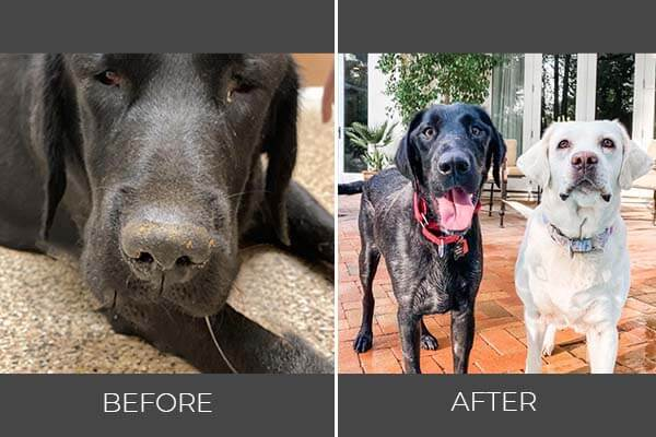 Rescued dog Gypsy before and after photo