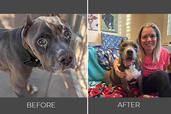 Rescued dog Michael before and after photo