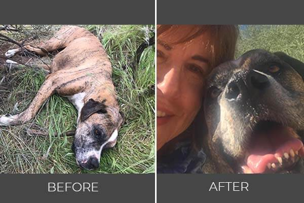 Rescued dog Mocha before and after photo