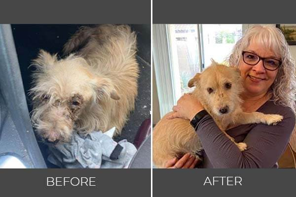 Rescued dog Pinky before and after photo