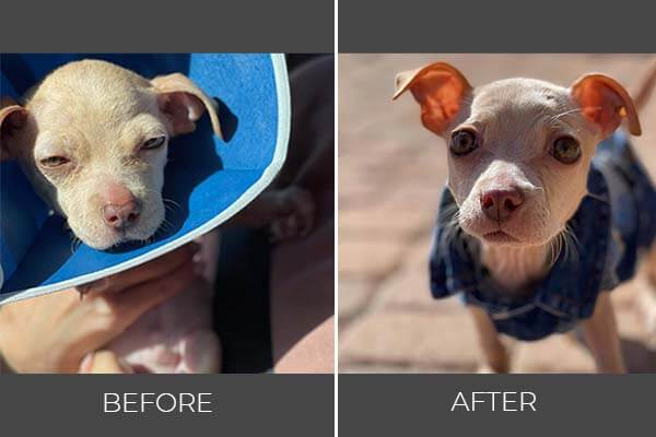 Rescued dog Turkey before and after photo