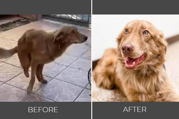 Rescued dog Dan before and after photo