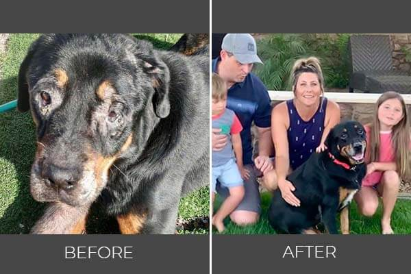 Rescued dog Vadar before and after photo
